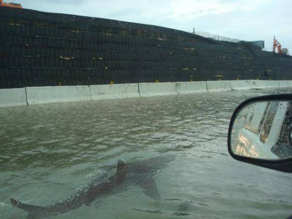 shark-hurricane-irene