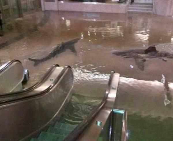 sharkhoax_subway_scientific_center_kuwait